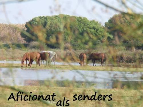 Cavalls al Delta